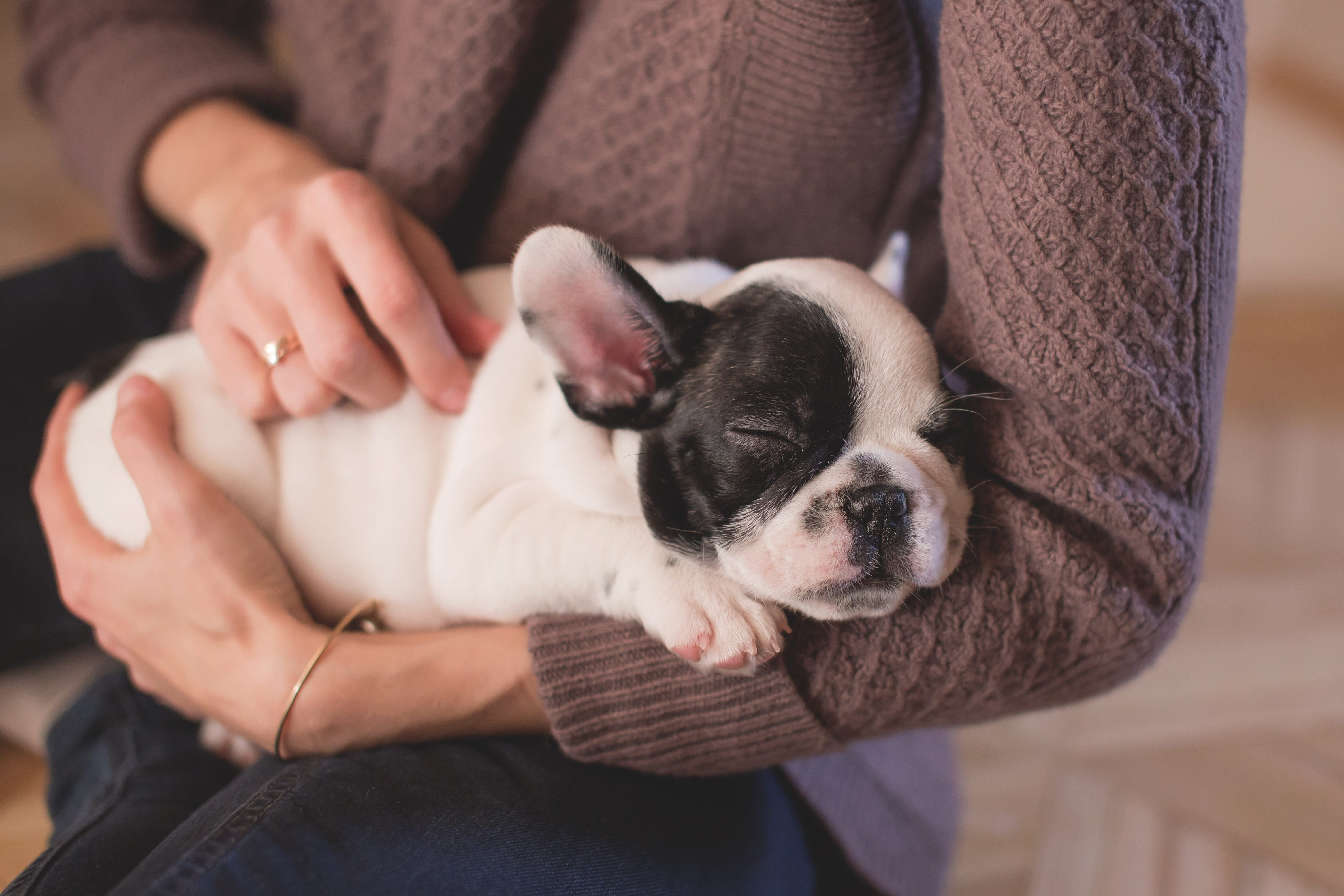Advice For First-Time Pet Owners