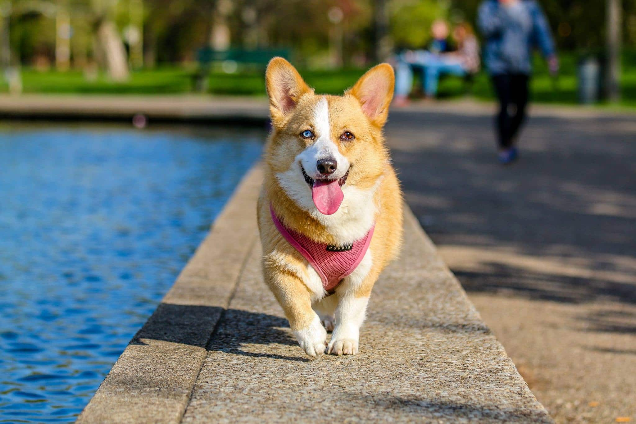 10 Nutritious Foods For Your Dog