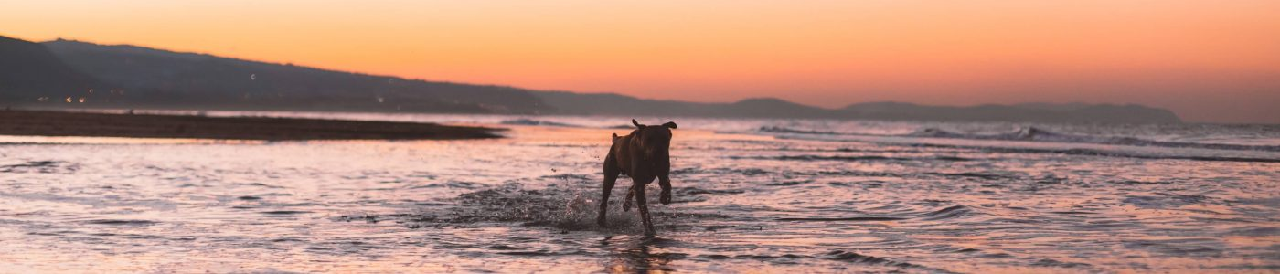 dog beach sunset